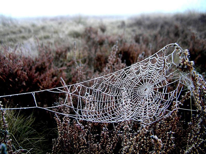 Een bevroren spinnenragje, een kunstig geweven kleedje - Foto: Christien Mouw