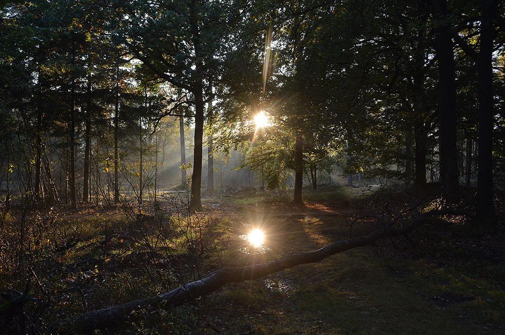 7-dsc_4581De zonnestralen weerkaatsen in de plas op het bospad - Foto: Louis Fraanje