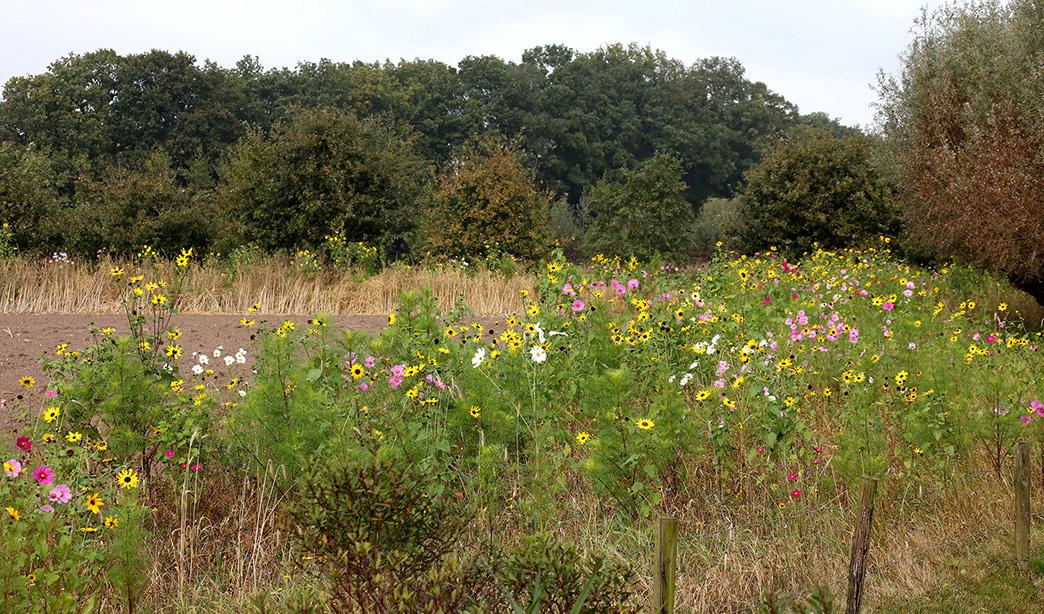 bloemenrand-weiland-de-vaarst-1