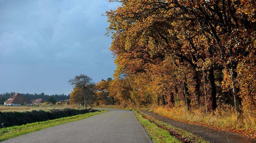 Vanaf De Koog genieten we van de herfstkleuren langs de Ruyslaan - Foto: Fransien Fraanje
