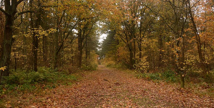 Tussen de dennen zien we steeds meer loofbomen - Foto: Fransien Fraanje