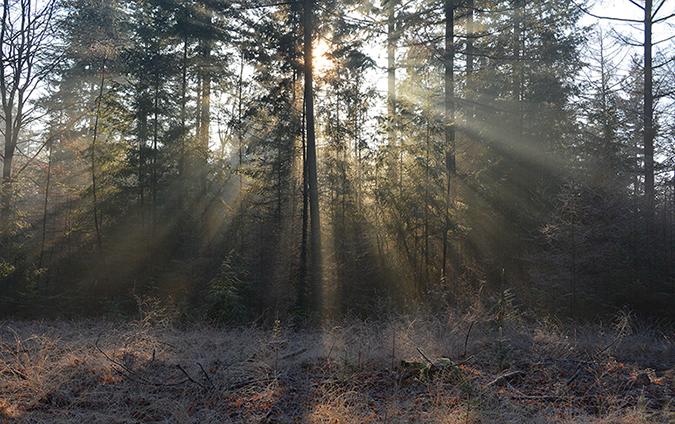 Zon door de bomen IJSHAAR