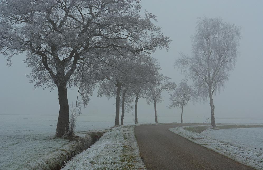 Een witte wereld langs de openbare weg - Foto: ©Fransien Fraanje
