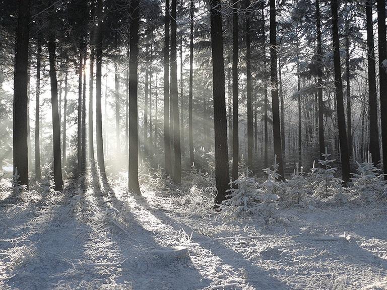 p1400344-3De zon laat haar lichtbundels door de bomen schijnen - Foto: ©Louis Fraanje