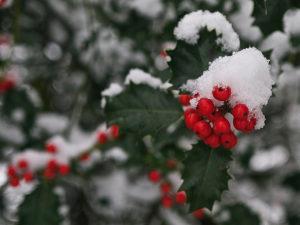 Hulsttakje in de sneeuw - Foto: ©Ger ten Haaf