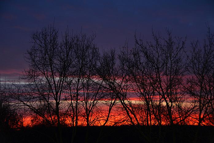 Het vlammende morgenrood geeft kleur aan de kale bomen in de winter - Foto: ©Louis Fraanje
