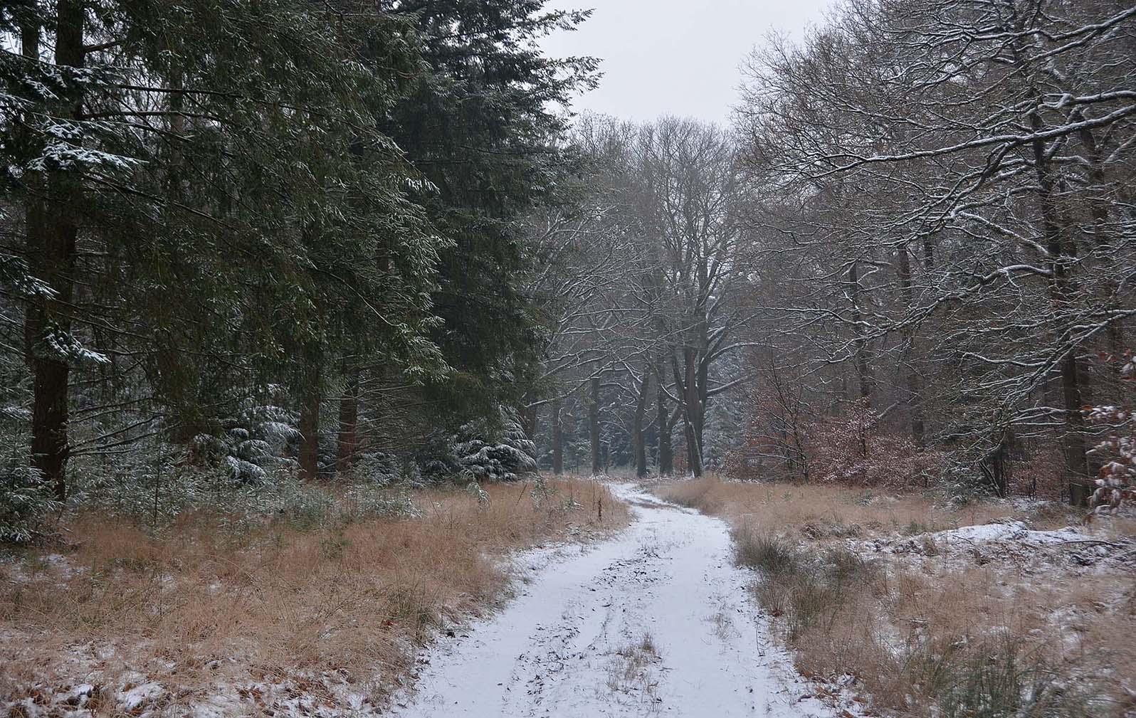 dsc_2863Het bospad lijkt net een groot wit lint door de natuur - Foto: ©Louis Fraanje