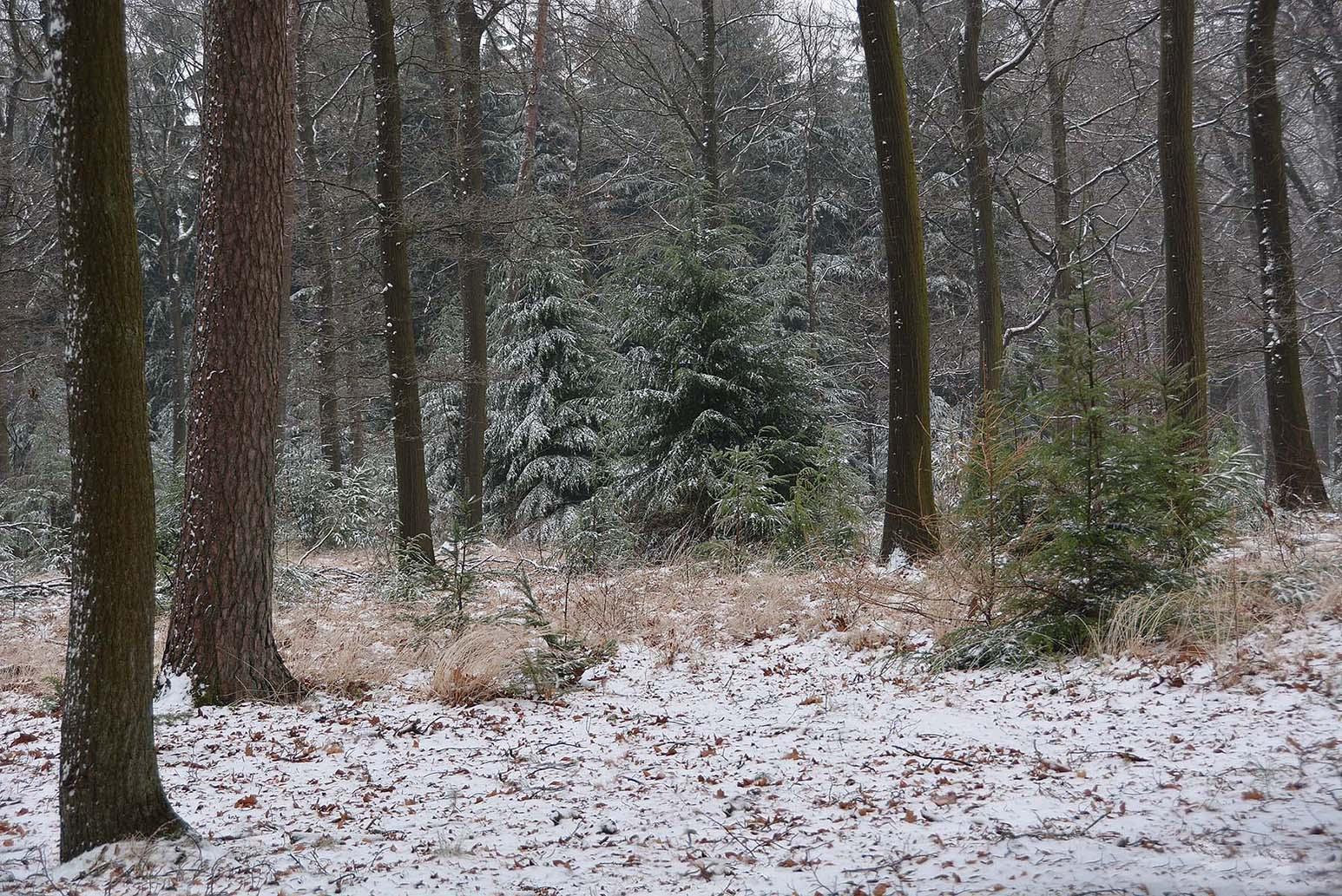 dsc_2897Het bos geeft nog geen echt 'winters' beeld te zien- Foto: ©Louis Fraanje