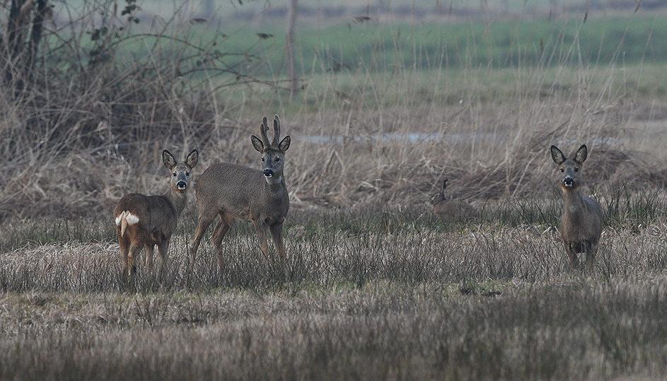 Zo stonden ze regelmatig even in mijn richting te kijken – Foto: ©Louis Fraanje