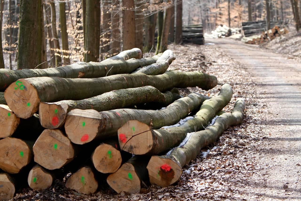 De hout- en bosindustrie is één van de grootste industrieën van de Bondsrepubliek - Foto: iStock
