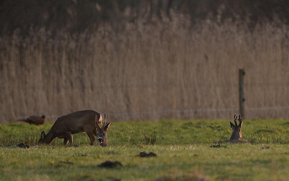 Nadat de reegeit is opgestaan, zie ik rechts zijn rivaal Matador - Foto: ©Louis Fraanje