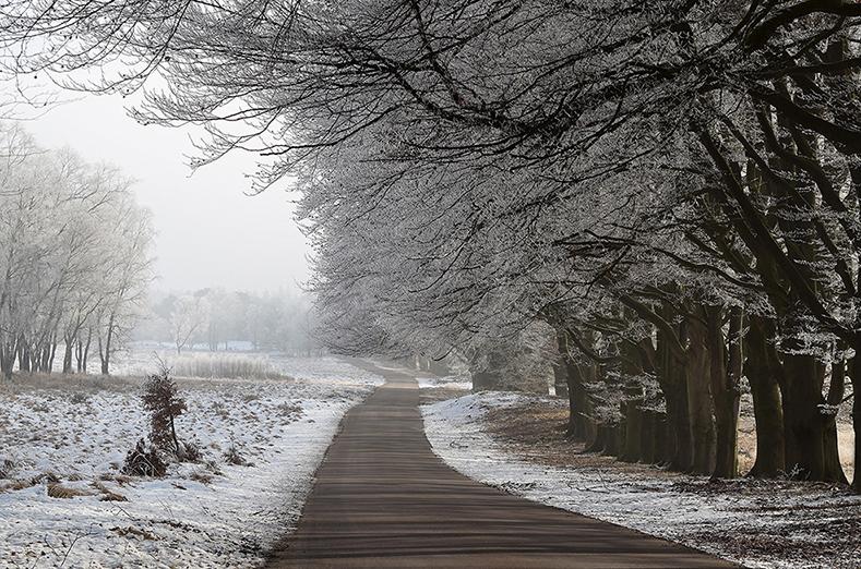 De bomen langs de weg waren prachtig witberijpt - Foto: ©Riek Gevers