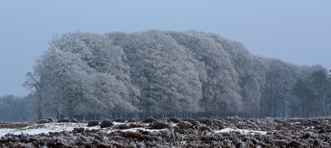 De wit berijpte bomen leken nu nog mooier - Foto: ©Riek Gevers