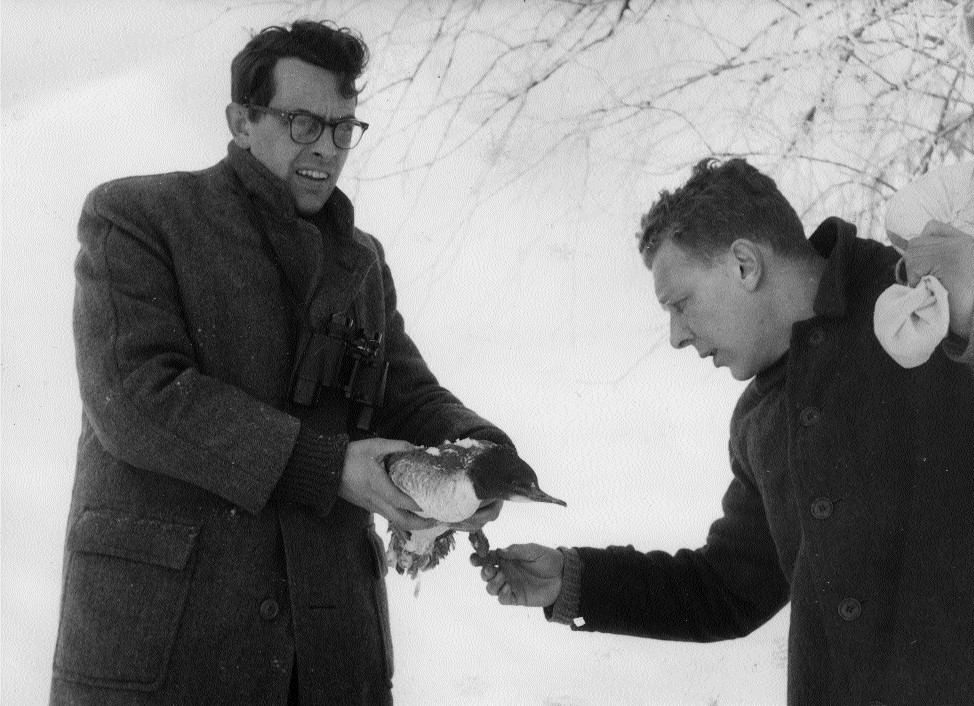 Henk van Schuppen(links) en Kees Wit met een zwaargewonde zaagbek - Foto: ©Jac. Gazenbeek