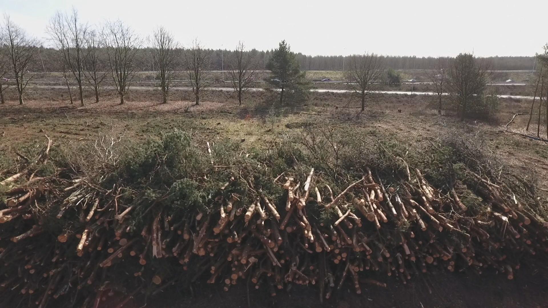 Worden onze bossen kaalgekapt voor de biomassa-industrie? - Foto: ©ZEMBLA
