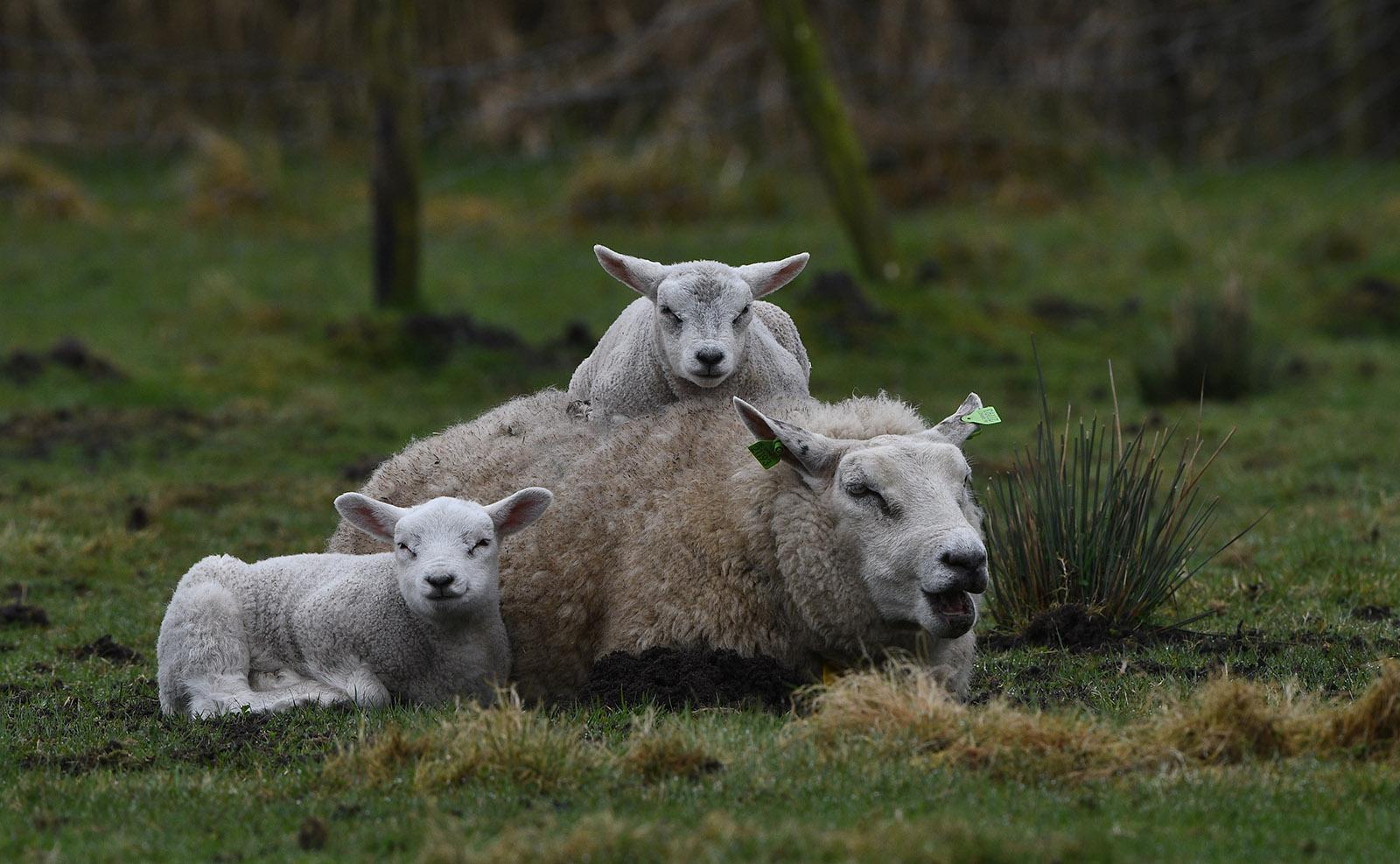 Oog in oog met het drietal in de wei – Foto: ©Louis Fraanje