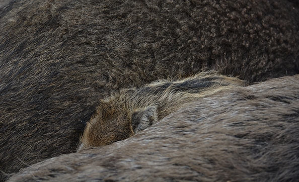 De kleine had zich er bijna helemaal tussen gewurmd - Foto: Louis Fraanje