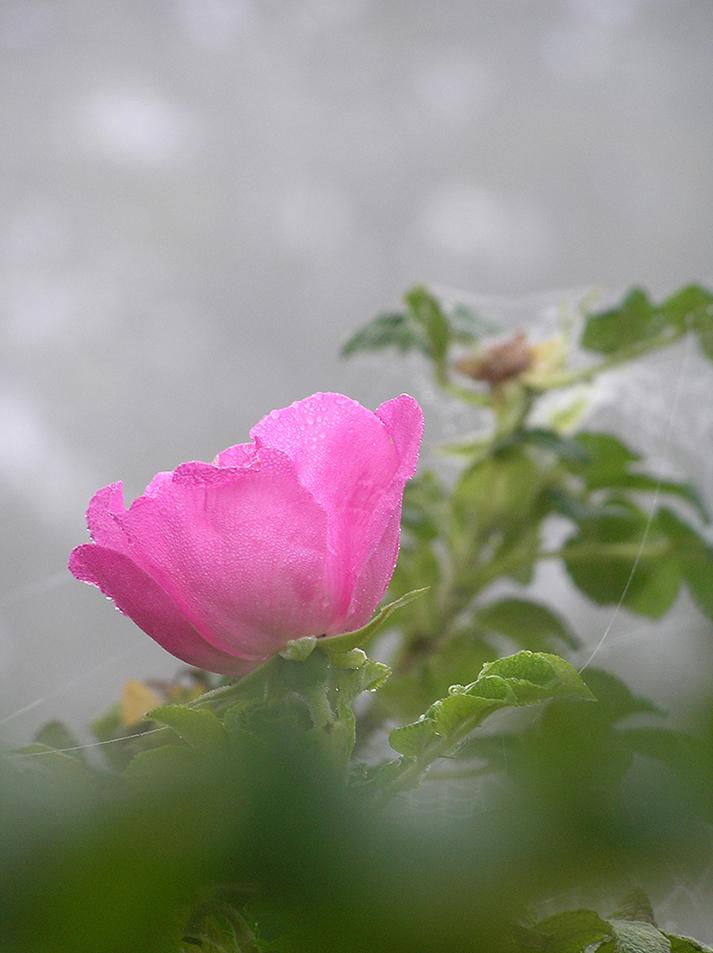 Afscheid in de Lente - Foto: Christien Mouw