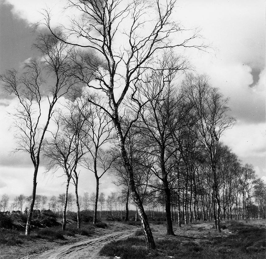 Zandweg met berken op de Veluwe - Foto: ©Jac. Gazenbeek