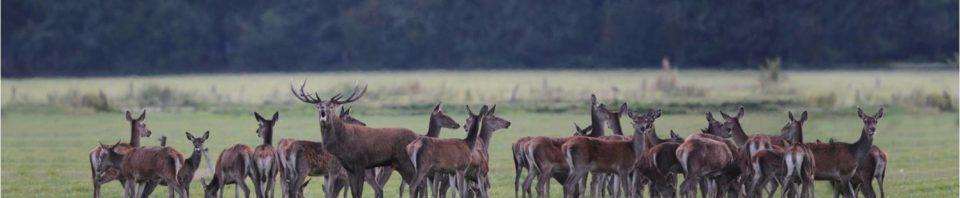 veluwse boeren ontevreden over faunabeleid! - de veluwenaar