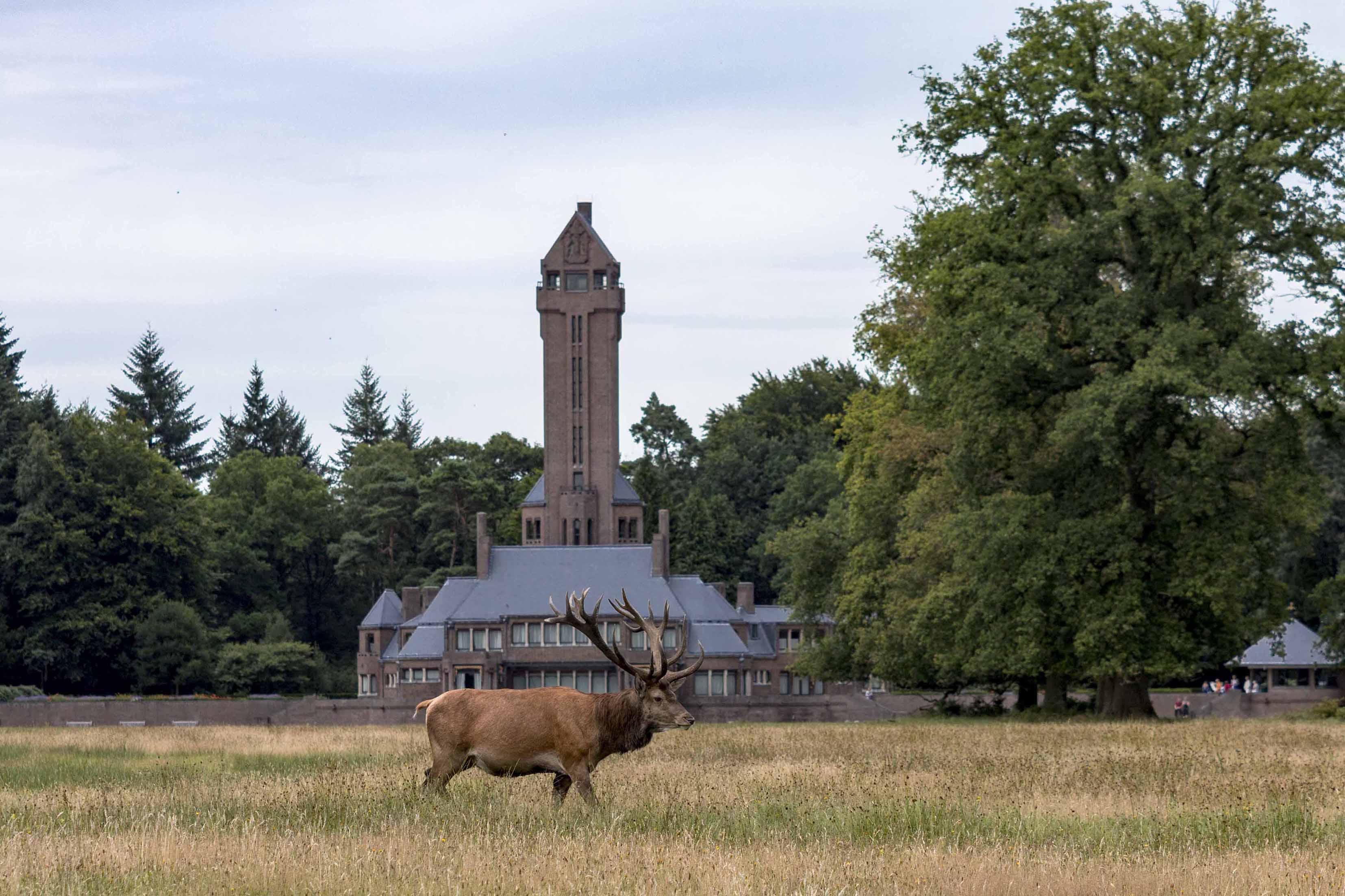 Het hert Hubertus voor het gelijknamige Jachthuis Sint Hubertus - Foto: ©Leon Sterk