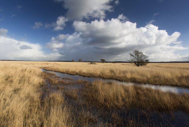 Het Deelense Veld een uitgestrekt open landschap op de Hoge Veluwe – Foto: ©Ruben Smit