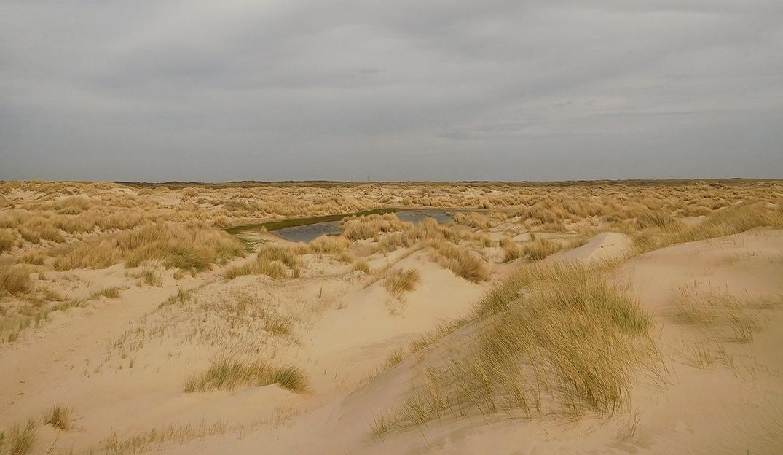 Duinen en valleien in de eenzaamheid van de Kreeftepolder - Foto: ©Fransien Fraanje