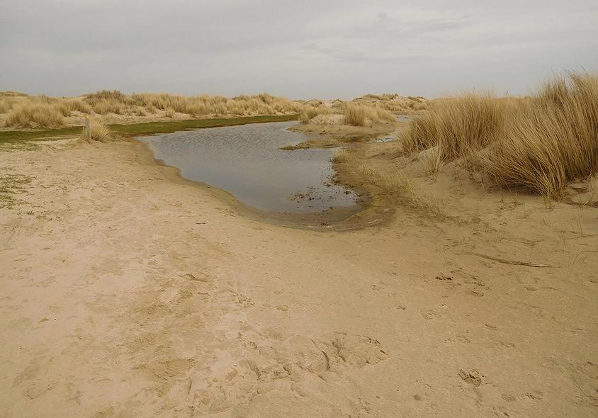 Een natte duinvallei ligt als een oase tussen de zandduinen - Foto: ©Fransien Fraanje