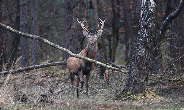 Dit jonge hert kwam ook nog even kijken - Foto: Johan Jansen