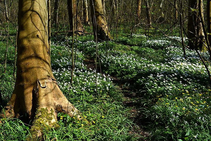 Een kleurig tapijt tussen de kale bomen - Foto: ©Louis Fraanje