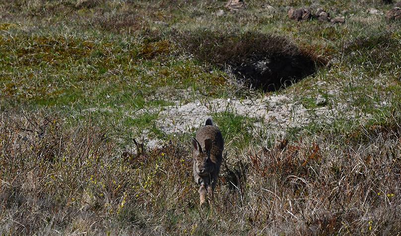 Dan... ineens, komt hij naar ons toe rennen - Foto: ©Fransien Fraanje