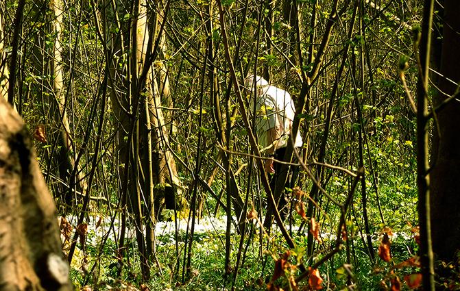 Het lijkt wel zomer daar tussen de bomen - Foto: ©Fransien Fraanje