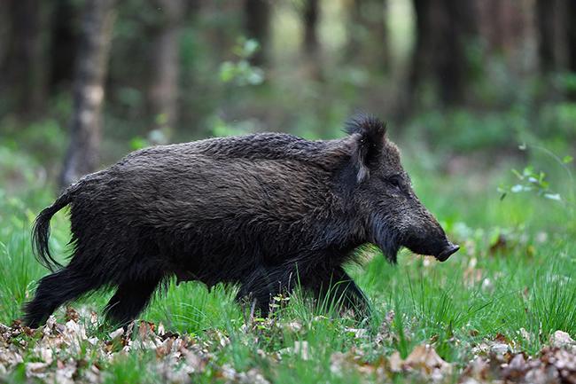 ... dan vertrekt de zeug weer richting het bos - Foto's: ©Louis Fraanje