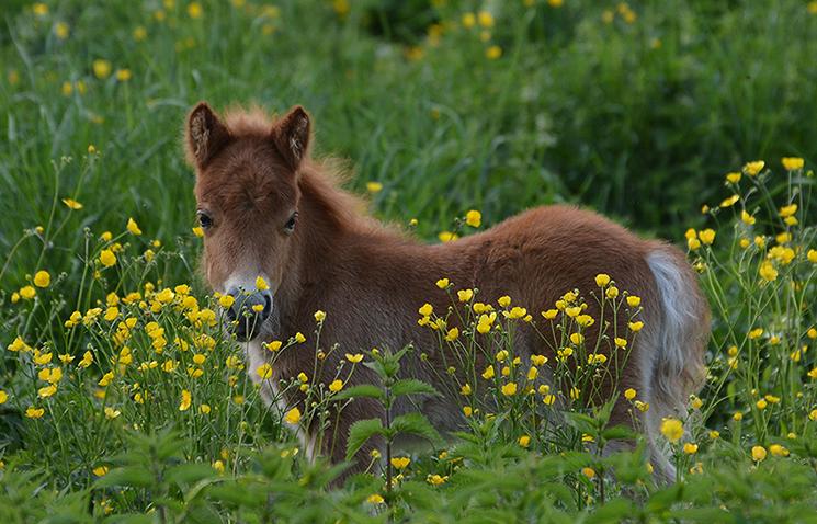 ...jong leven tussen de bloemen - Foto's: ©Louis Fraanje