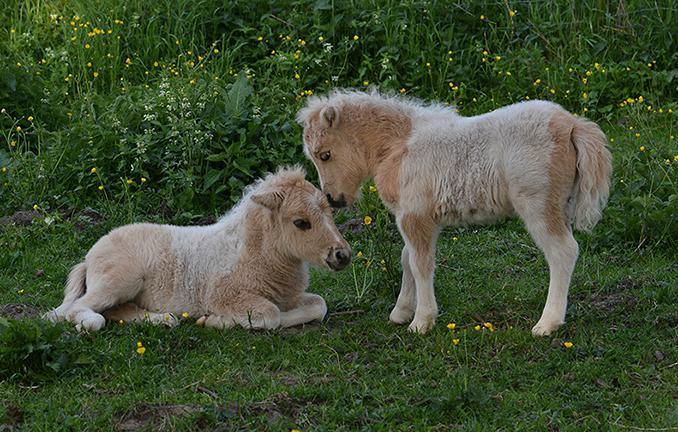 Een schitterend beeld, die twee zo bij elkaar - Foto: ©Louis Fraanje