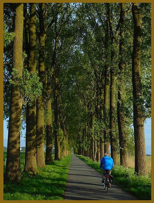 Een eenzame fietser in de Veensteeg - Foto: ©Louis Fraanje