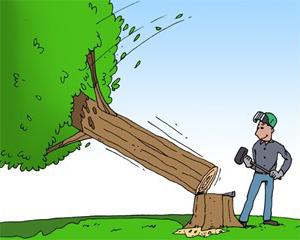 Houtkap boom vellen
