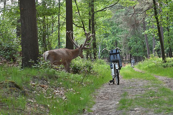 Hé... wat is dat nou daar midden op het bospad? - Foto: ©Louis Fraanje