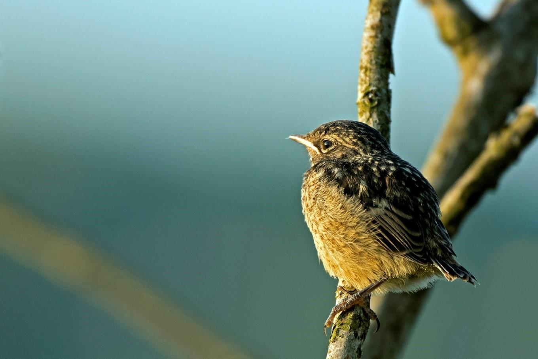 """In eerste instantie was deze jonge vogel een """"Mystery Quest""""… - Foto: ©Ton Heekelaar"""