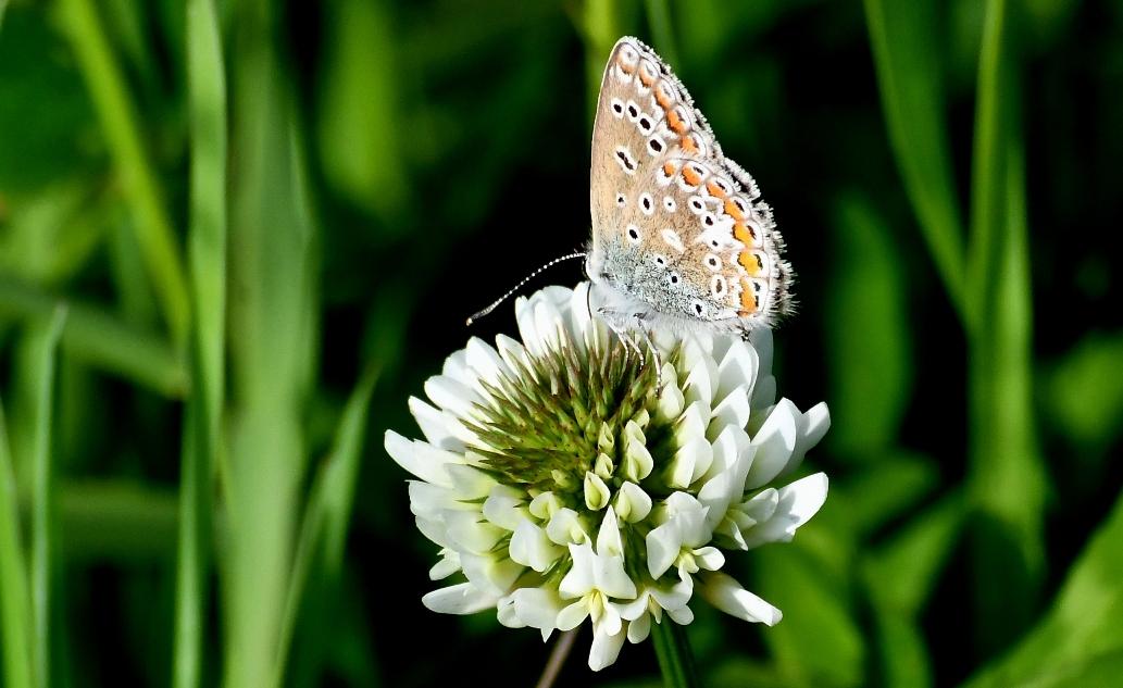 Ook van de zijkant is het een kleurrijke vlinder – Foto: ©Louis Fraanje