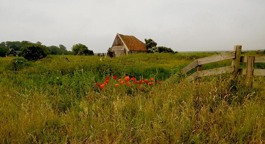 De oude schapenboet bij Den Hoorn is een dierbaar object voor de camera – Foto: ©Fransien Fraanje