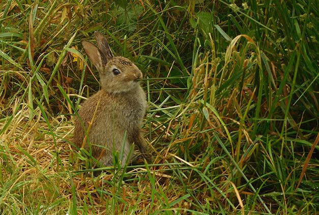 Het konijntje, onverstoorbaar aan de 'groene' maaltijd – Foto: ©Fransien Fraanje