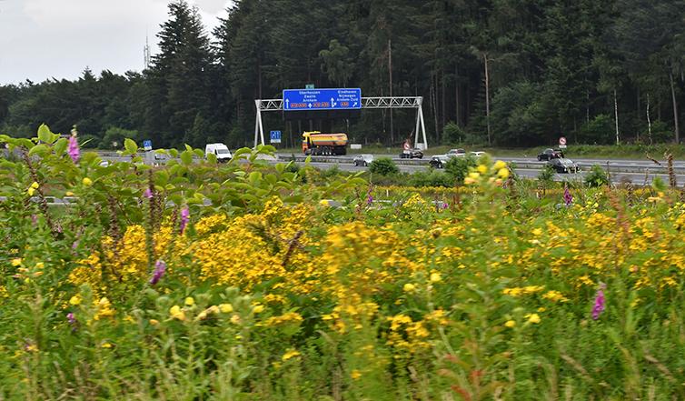 De snelweg A12 is een drukke verkeersader op de Veluwe – Foto: ©Louis Fraanje
