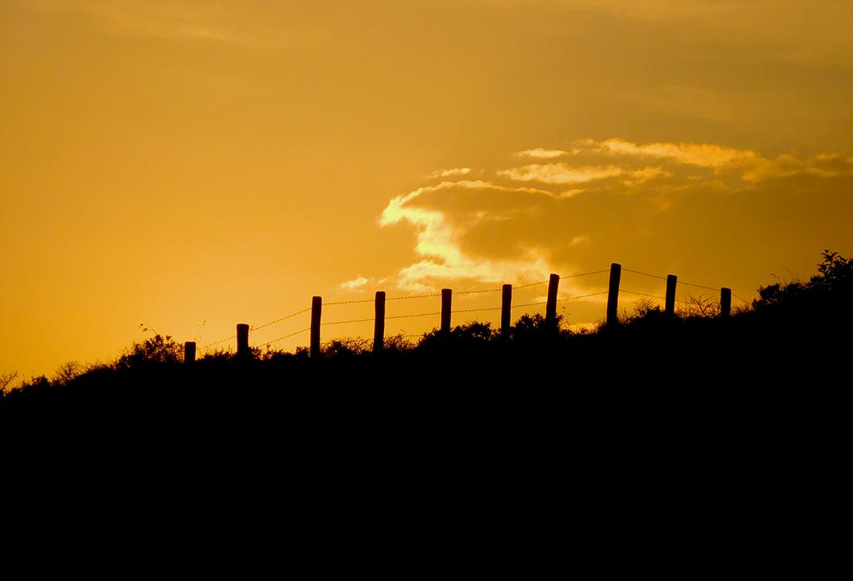 Het vlammende strijdros springt met gemak over de afrastering - Foto: ©Fransien Fraanje