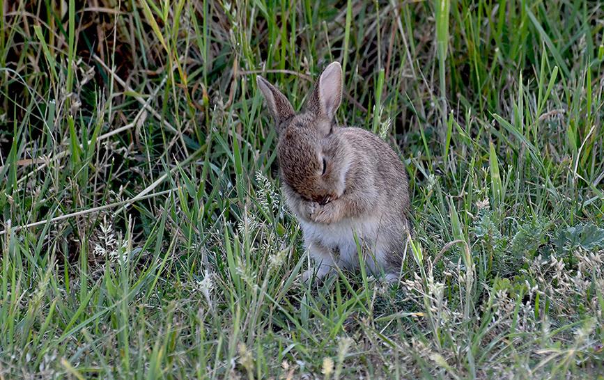 Het leek wel of het konijntje zijn ochtendgebedje deed - Foto: ©Louis Fraanje