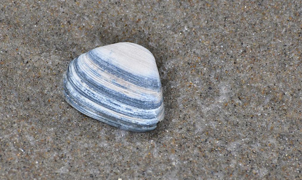 Prachtige ringen in een schelp...