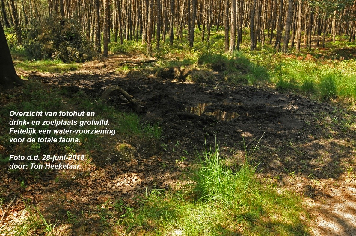 Een Impressie van de gecamoufleerde schuiltent en drink/zoel grofwild - Foto: ©Ton Heekelaar