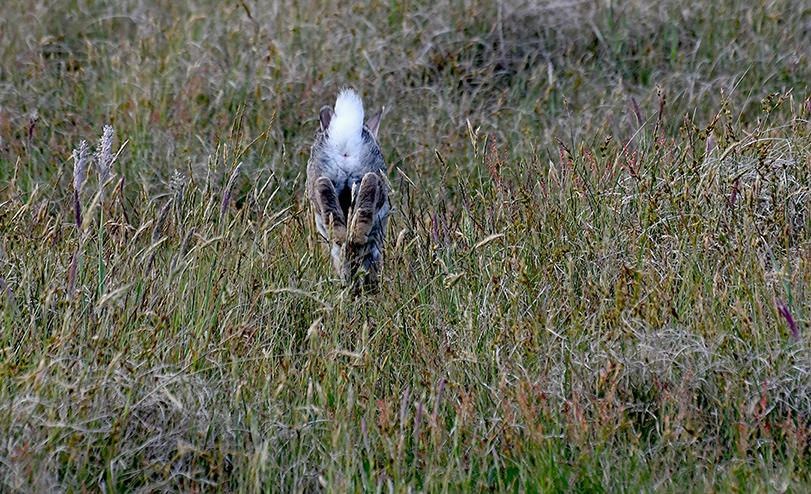 een witte pluim in het gras - Foto's: ©Louis Fraanje