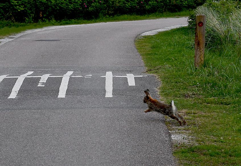 Stak hij ineens vlak voor ons, dwars de weg over - Foto: ©Fransien Fraanje