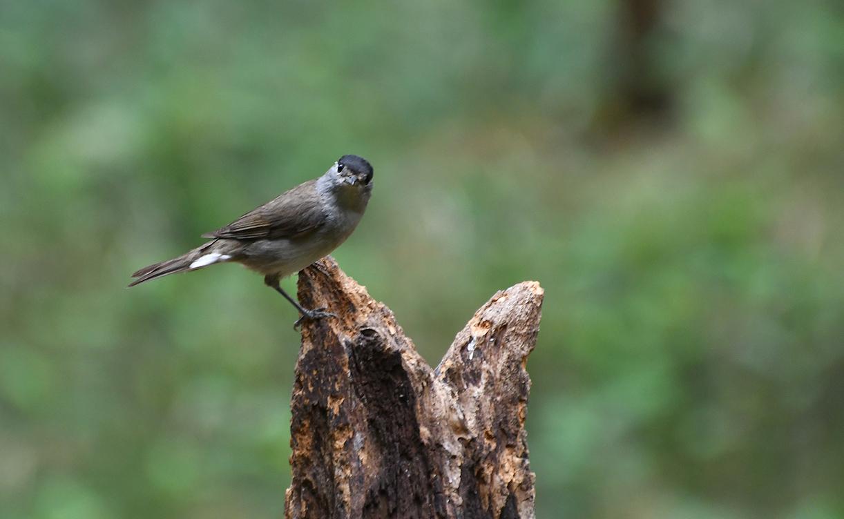 ... ook het mannetje kwam kijken - Foto's: ©Louis Fraanje